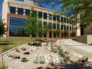 Arlington Library rainwater runoff bed