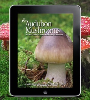 Audubon Mushrooms Guide app