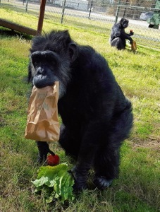Black Beauty Ranch Midge and Lulu the chimps