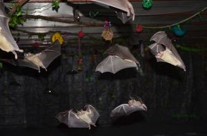 Bat World Sanctuary flight cage