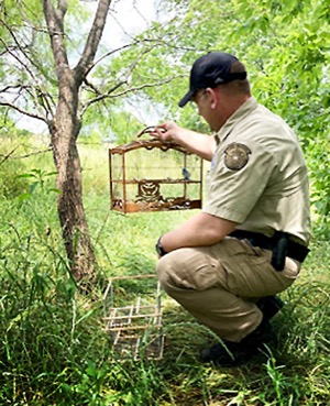 Songbird trap in River Legacy Park