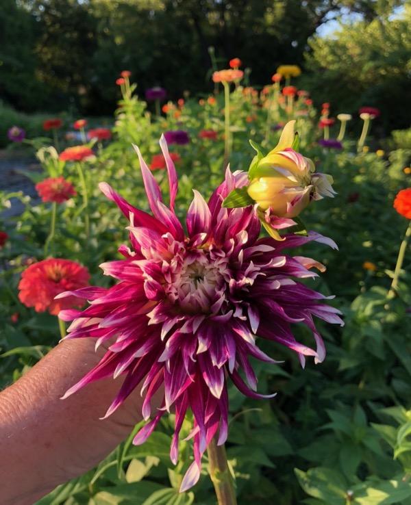 Bishop Hill Flower Farm