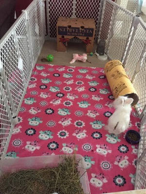 Bunny enrichment