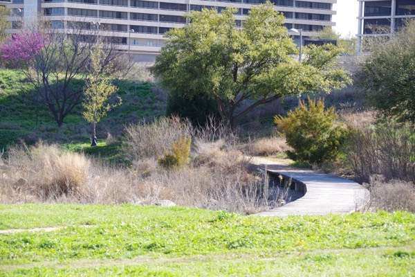 Native Prairie Park at Bush library