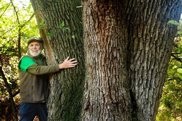 Old Caddo Oak