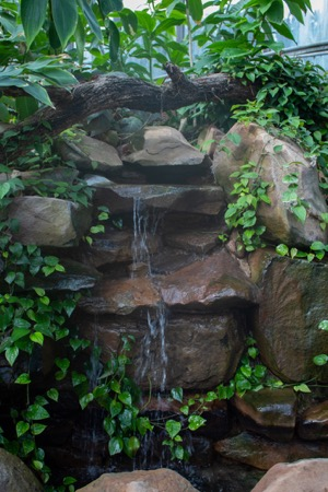 Fort Worth Botanic Garden Conservatory waterfall