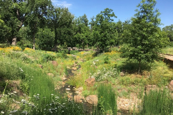 Fort Worth Botanic Garden prairie restoration