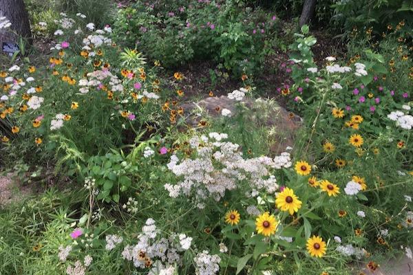 Native Plant Garden at FWBG