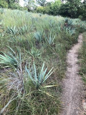 Fort Worth Nature Center Canyon Ridge Trail