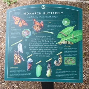 Monarch Life Cycle sign at Forest Park Pool