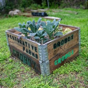 Container Garden in box