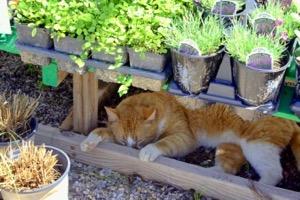 Weston Gardens cat