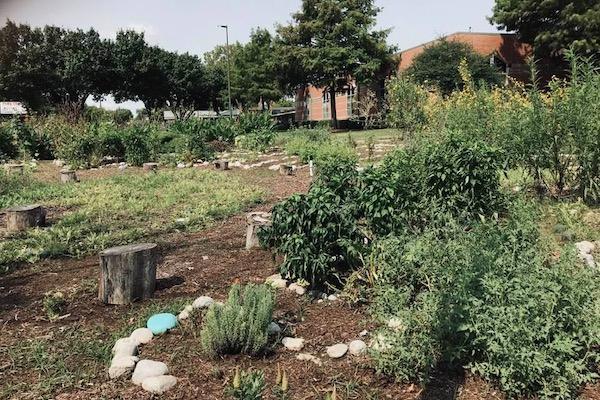 Park Crest Elementary garden in Garland