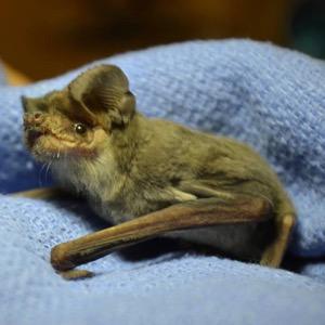 Gramps at Bat World