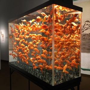 Helen Altman, Goldfish