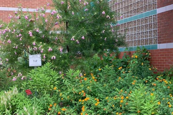 Southwest Library pollinator garden