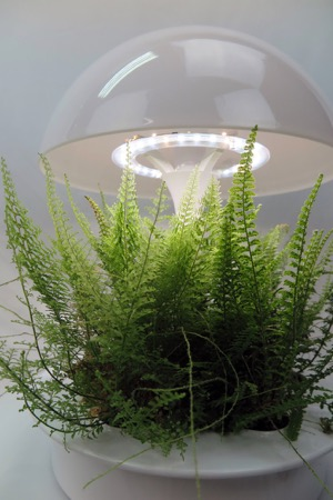 Indoor gardening - fern