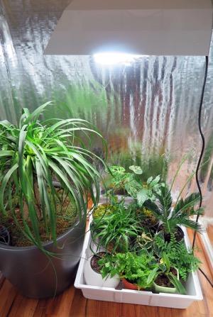 Indoor garden - closet garden