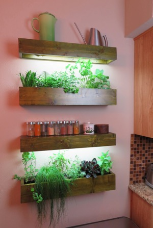 Indoor gardening - kitchen herbs