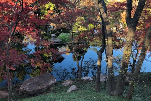 Japanese Garden in Fort Worth