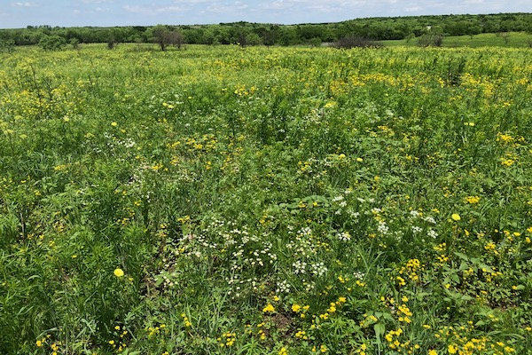 McWhorter prairie restoration