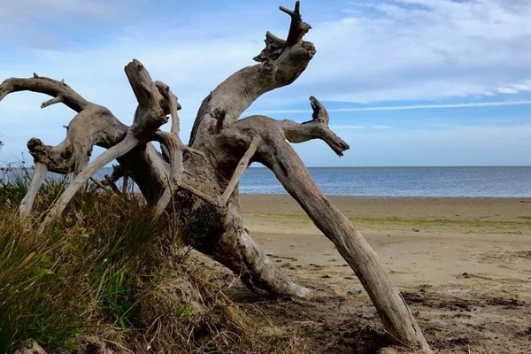 Driftwood on Texas Gulf Coast