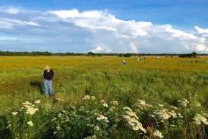 Daphne Prairie rainbow