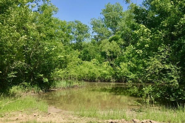 McCommas Bluff Preserve