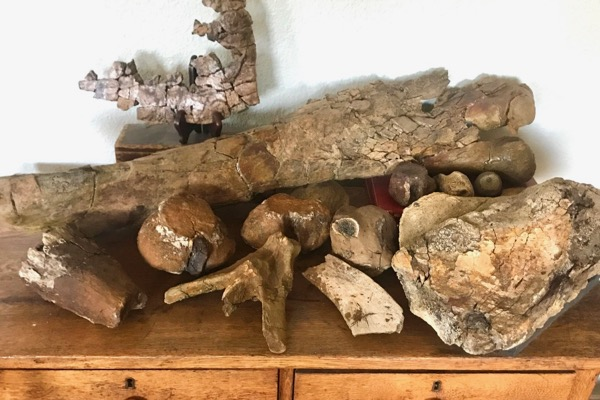 Mick Tune's fossil collection