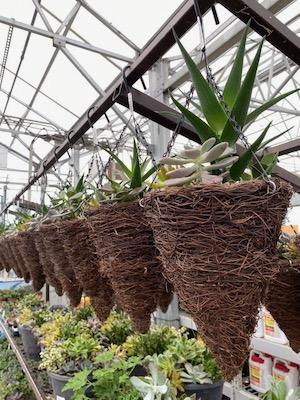 Lowe's succulent baskets