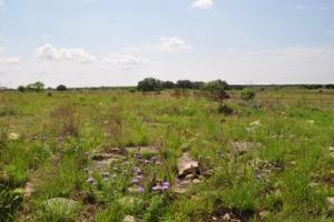Wagley Ranch monarch habitat restoration