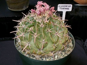 FW Cactus and Succulent Society Plant Sale