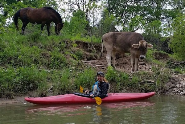 Cow and horse along Trinity River