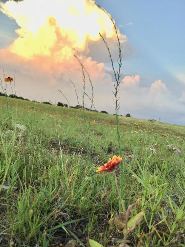 Prairie Plant rescue