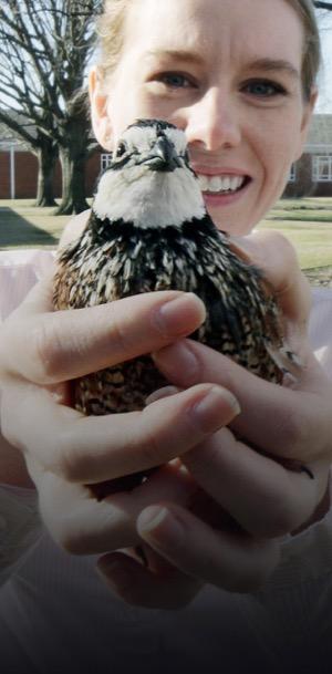 Kirby the quail ambassador