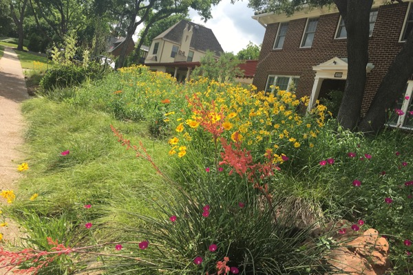 Fort Worth xeriscape