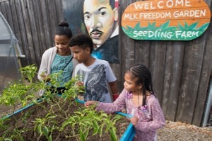 The Seedling Farm at MLK Community Center