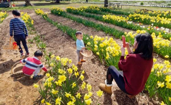 Storm Farm daffodils