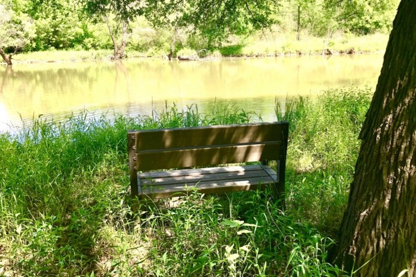 Trinity Forest Trail bench