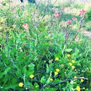 Trinity Forest Trail wildflowers