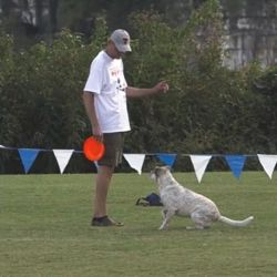 Tom Kemper and Hank at Skyhoundz Canine Disc Championship