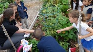 UNTHSC Community Garden