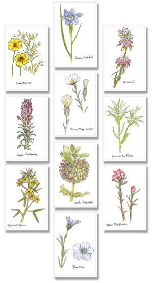 Deborah Young wildflower cards
