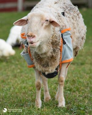 Farm Sanctuary Adoption Program