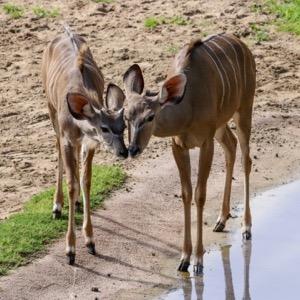 Kudos Zuberi and Ada at Dallas Zoo