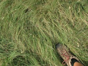 Turf Talk Experts Say North Texas Lawns Need To Change