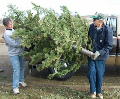 DFW Cities Offering Christmas Tree Recycling GreenSource DFW - Baltimore City Christmas Tree Pickup