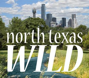 North Texas Wild logo