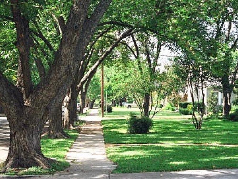 Dallas Tree Advocates Say City S New Urban Forestry Unit