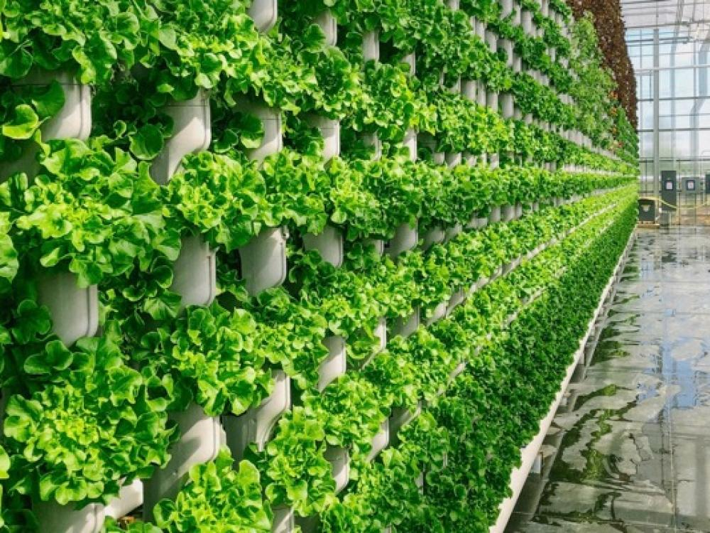 Dallas-based company has high hopes for vertical farming ...